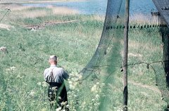 Fischer Bruno Dahl hängt die Zeese an Land zum trocknen auf (Foto: Prof. Dr. Hoffmann)